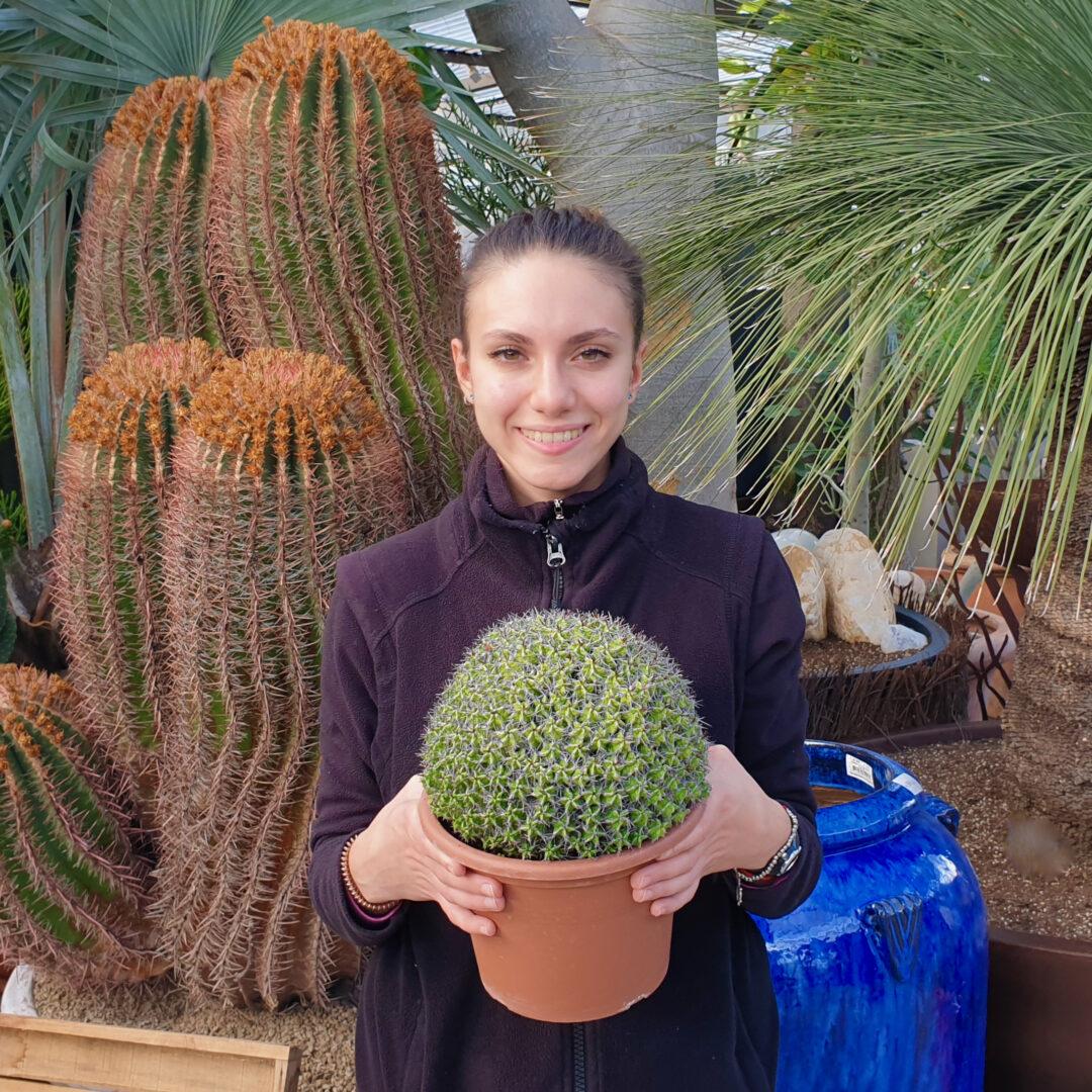 Euphorbia mitriformis innesto vaso 20