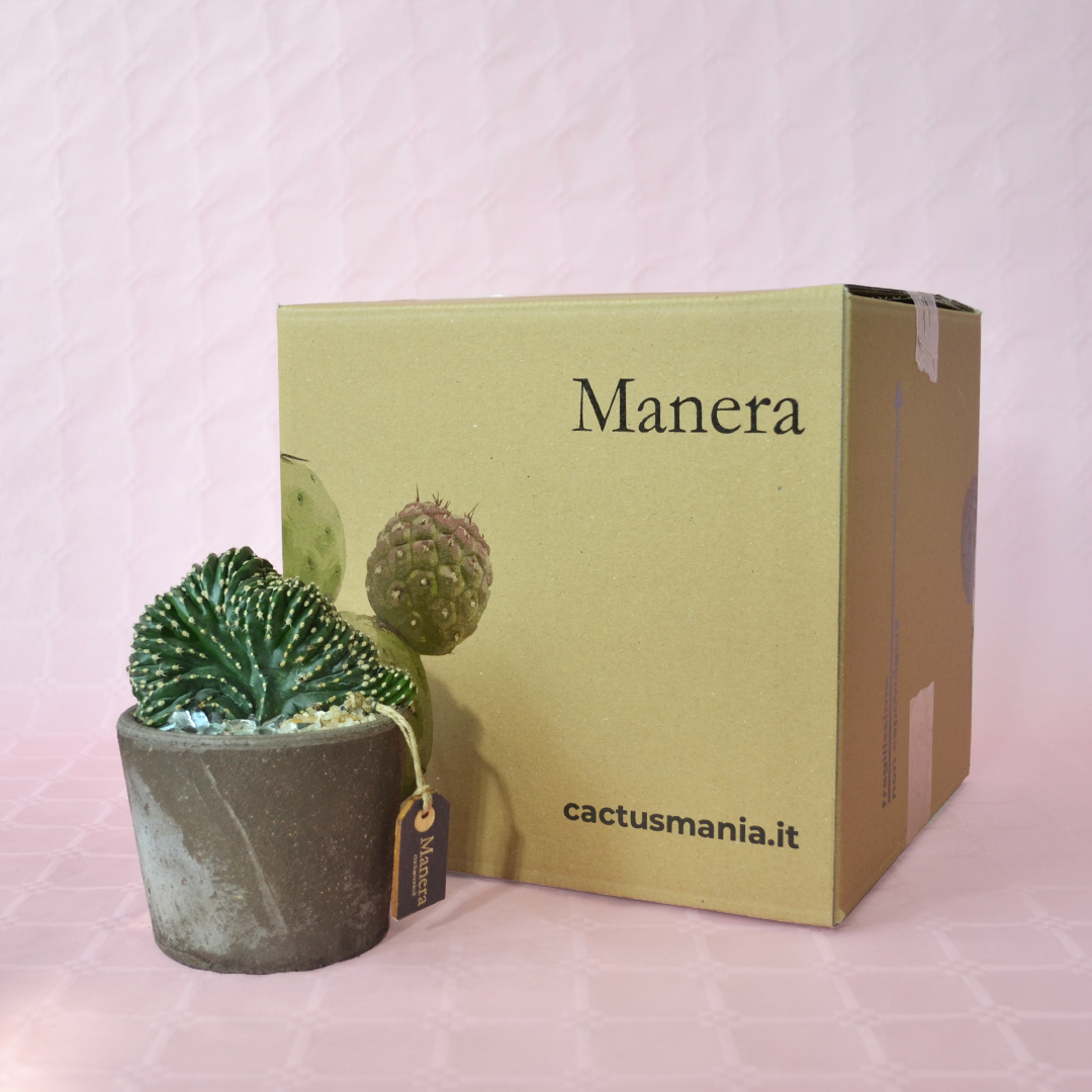 Marginatocereus marginatus crestato - Linea Manera