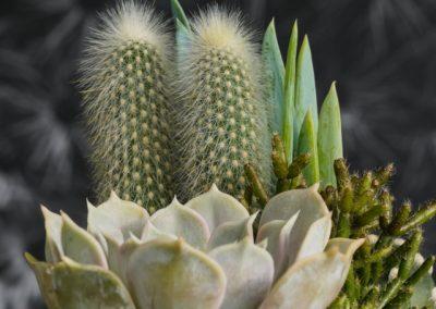 Ceramica celeste grande primavera 2020 Echeveria WEB
