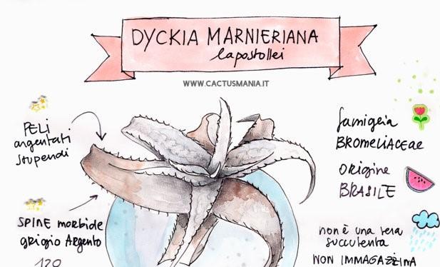 Dyckia marnieriana lapostollei