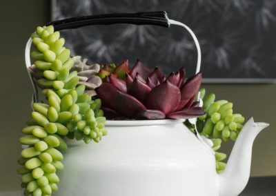 Teiera Echeveria Colori Mix Primavera WEB