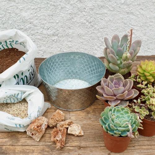 Cactuschool composizione piante grasse senza spine