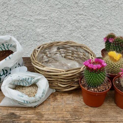 Cesto cactus fioriti