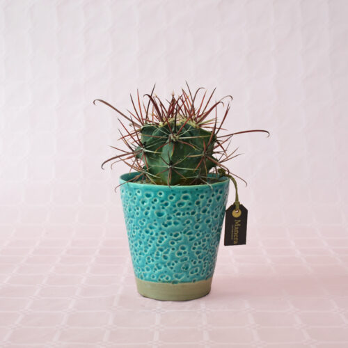 ferocactus gracilis-1