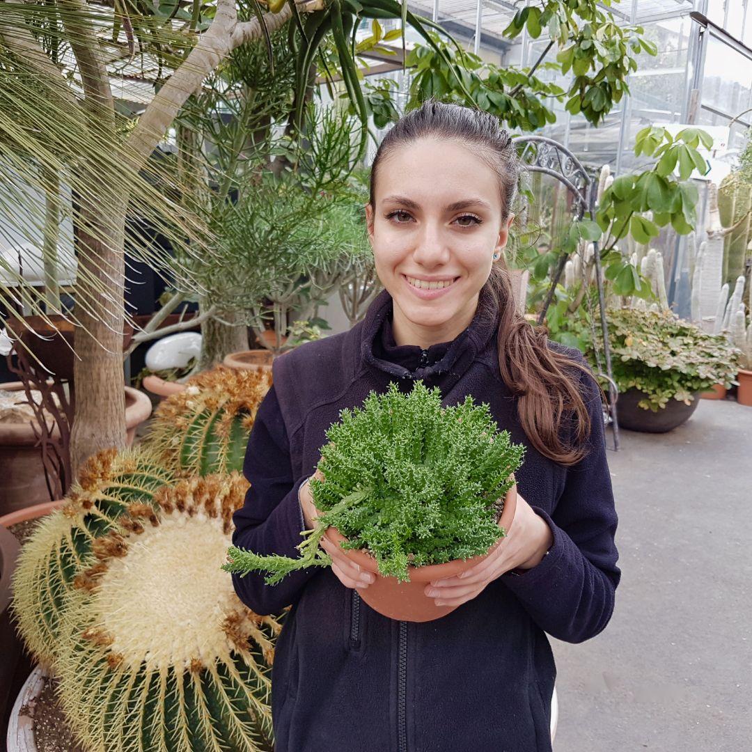 Euphorbia gorgonis vaso 18