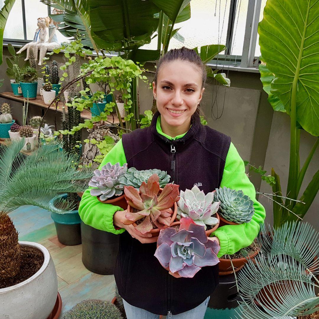 Collezione Echeveria 6 piante vaso 1