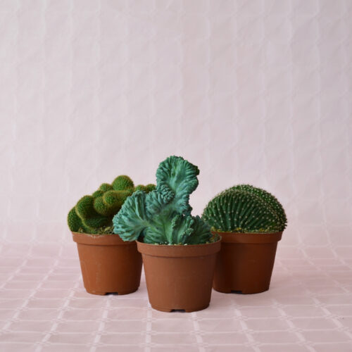 collezione 3 crestate vaso 10,5