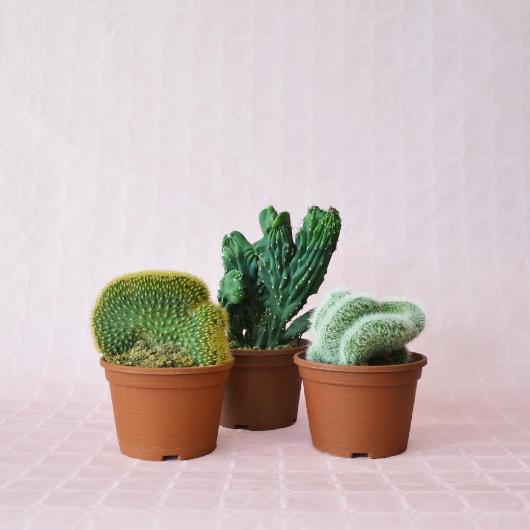 collezione 3 crestate vaso 14