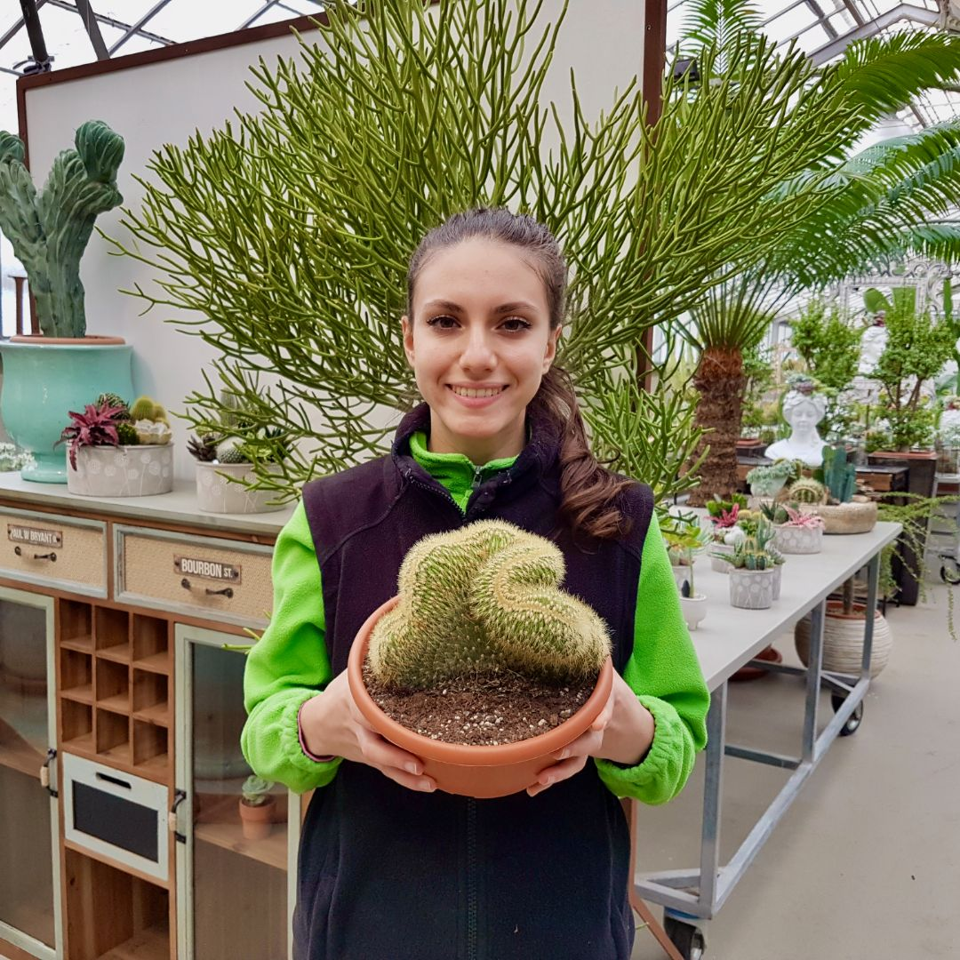 Espostoa vatricania guentheri vaso 20
