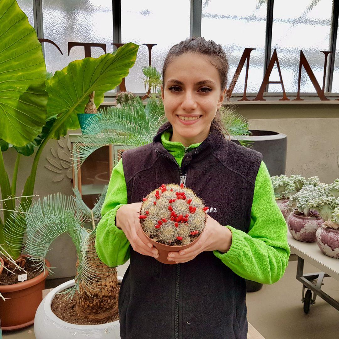 Mammillaria prolifera vaso 14