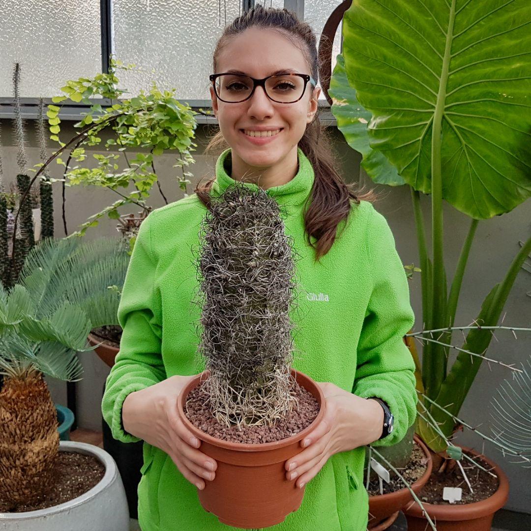 Astrophytum capricorne senilis vaso 18 06C
