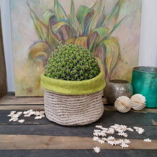 Euphorbia mitriformis