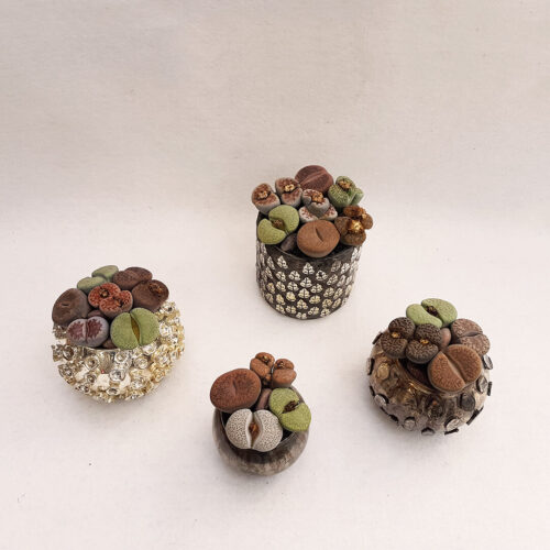 Lithops Bijoux Collection