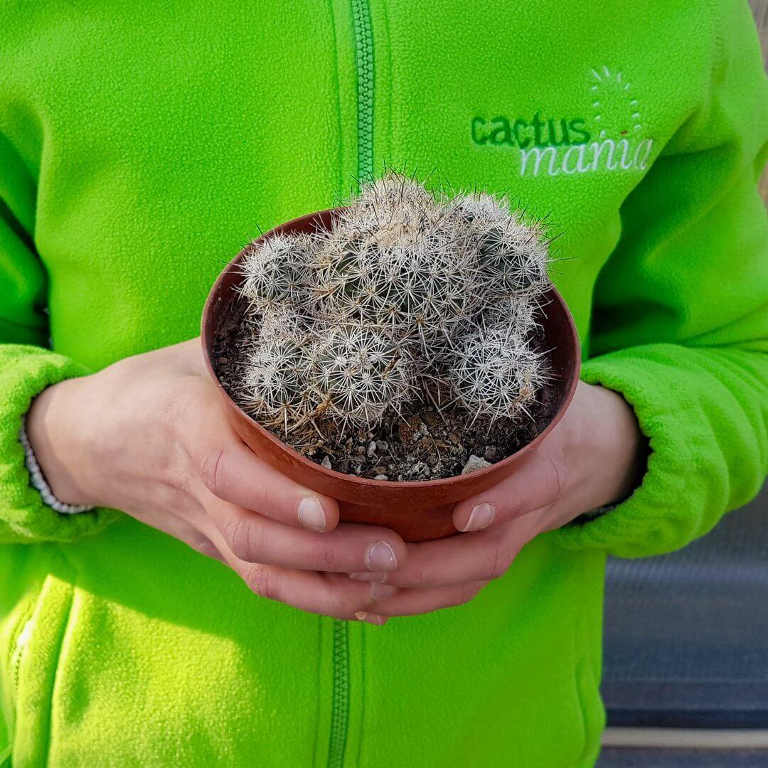 turbinicarpus horripilus vaso 12 57c-4