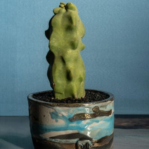 Lophocereus schottii major vaso Raku