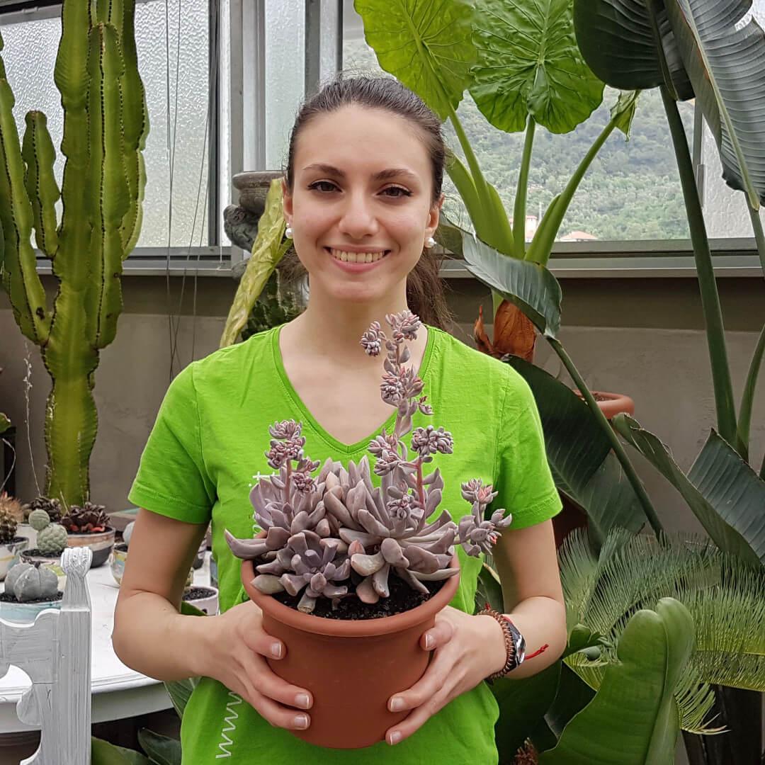 Echeveria Lilac Spoons vaso Ø 18