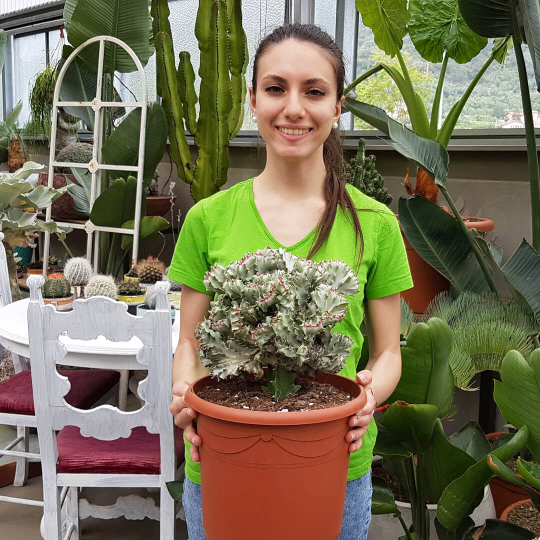 Euphorbia lactea crestata variegata vaso Ø 26