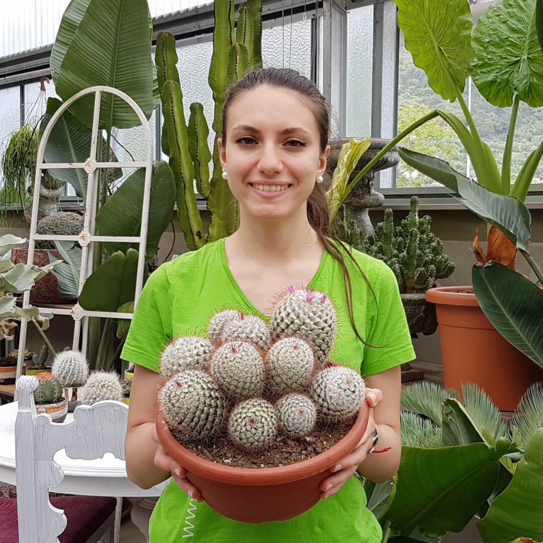 Mammillaria bombycina vaso Ø 25