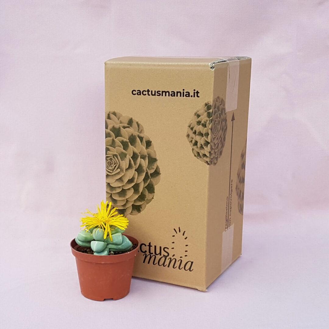 Lapidaria margaretae vaso Ø 10,5