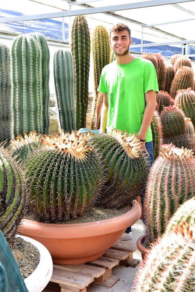 Echinocactus ingens esemplare