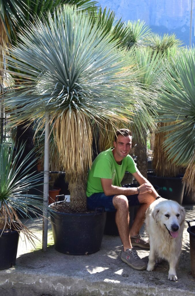 Yucca rostrata_ge_3