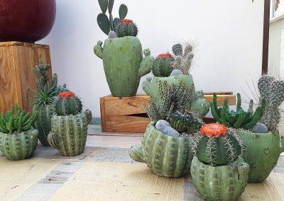 Linea Cactus 2018
