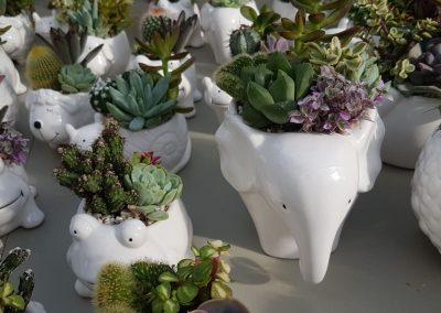 Composizione Cactus Zoo 1