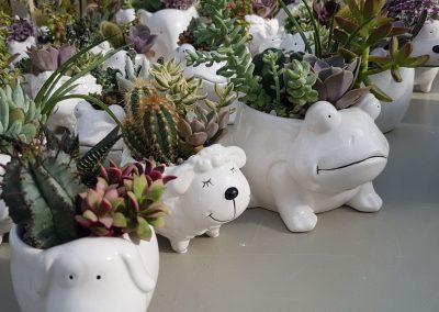 Composizione Cactus Zoo 4