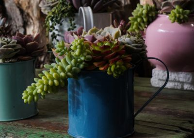 Mug Piccolo Echeveria Colori Mix Primavera 2020 WEB