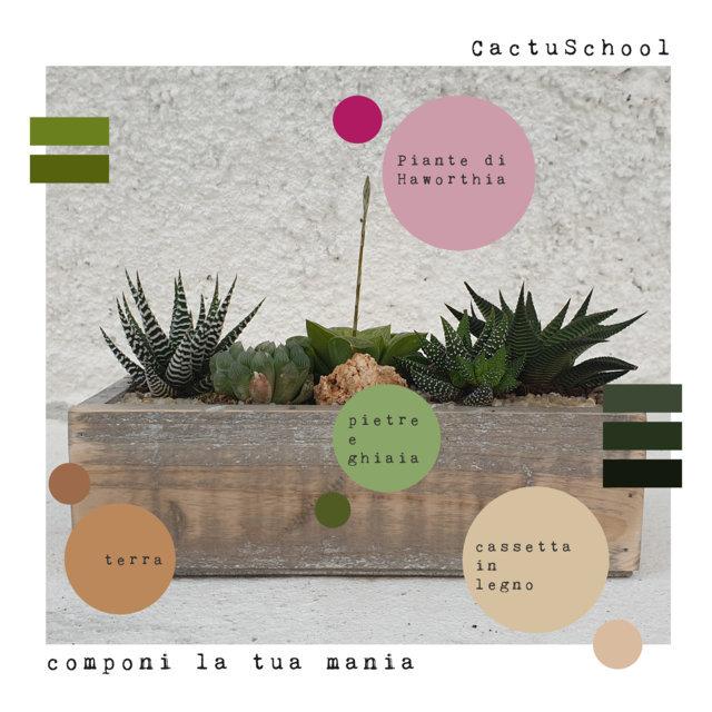 "CactuSchool – ""Componi la tua Mania"" – COMPOSIZIONE HAWORTHIA"